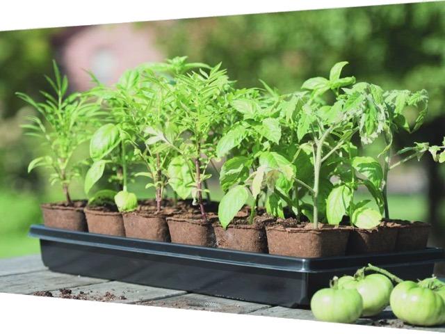 ruilmarkt-planten-zaden-stekjes